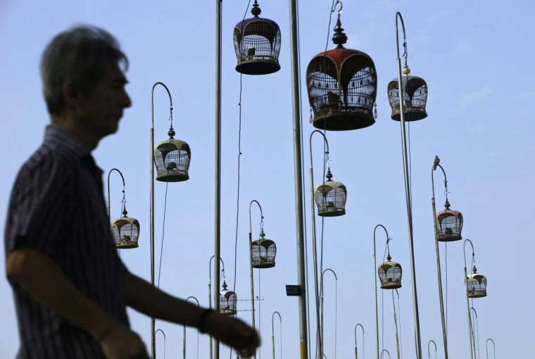 A man walks past cages of birds hung up at a bird singing corner in Singapore March 10, 2013. (Edgar Su/Reuters)