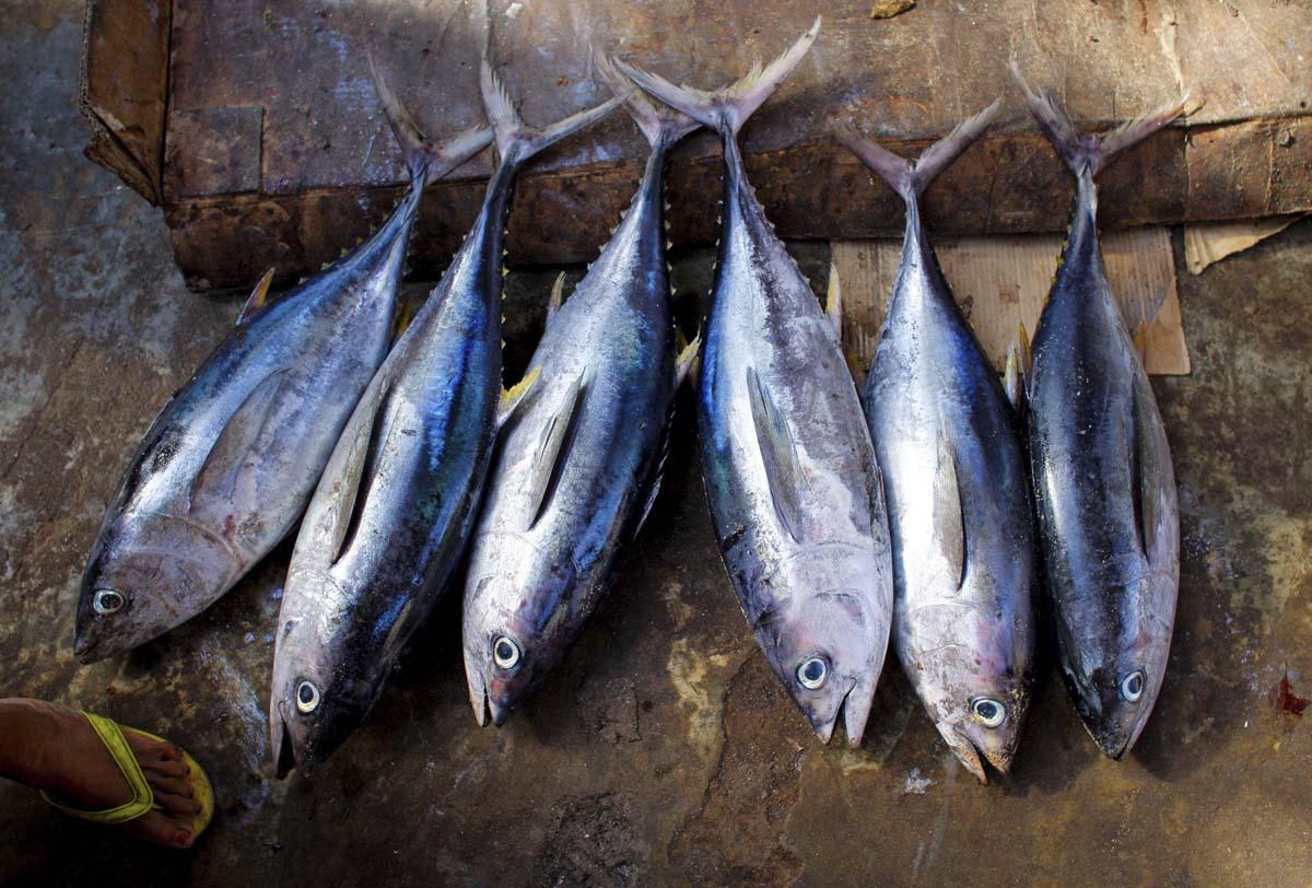 Off the hook fishing industry in mogadishu for Tuna fish price