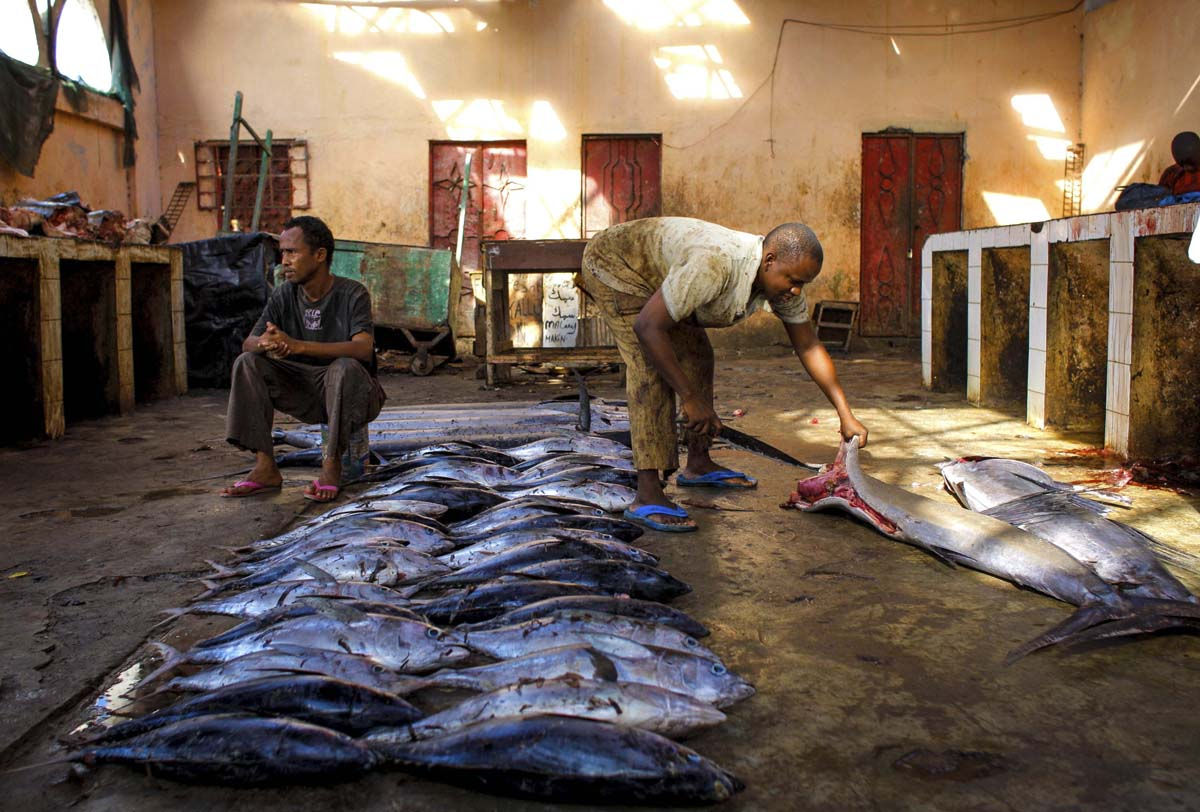 Off the hook fishing industry in mogadishu for Fish market prices
