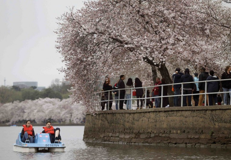 March 18, 2012: People paddle a boat on the Tidal Basin during the first bloom of the cherry blossoms in Washington. (Gary Cameron/Reuters)