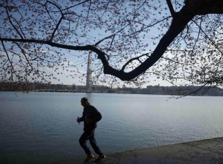 April 5, 2013: A man runs past cherry blossom buds that have yet to bloom around the Tidal Basin in Washington. Low seasonal temperatures in the Washington area have delayed the annual cherry blossom display that draws tourists into the area in great numbers. (Gary Cameron/Reuters)