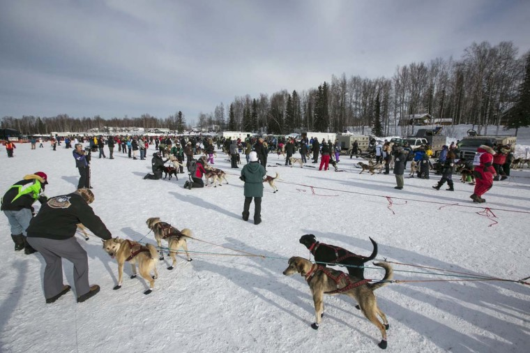 Dog teams are lined up for the start gate at the re-start of the Iditarod dog sled race in Willow, Alaska March 3, 2013. From Willow, the race runs for almost 1000 miles as it crosses the state. (Nathaniel Wilder/Reuters)