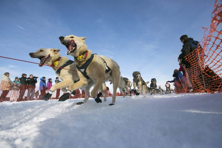 Linwood Fiedler's team charges down the trail during the re-start of the Iditarod dog sled race in Willow, Alaska March 3, 2013. From Willow, the race runs for almost 1000 miles as it crosses the state. (Nathaniel Wilder/Reuters)