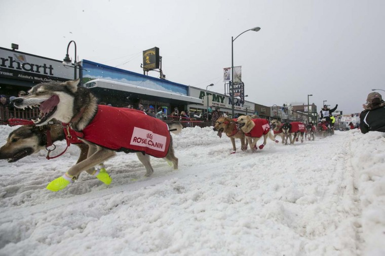 Ed Stielstra's team charges out of the start gate on 4th Avenue during the ceremonial start to the Iditarod dog sled race in downtown Anchorage, Alaska March 2, 2013. (Nathaniel Wilder/Reuters)