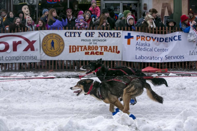The dogs of musher Curt Perano of New Zealand charge out of the start gate at the ceremonial start to the Iditarod dog sled race in downtown Anchorage, Alaska March 2, 2013. (Nathaniel Wilder/Reuters)