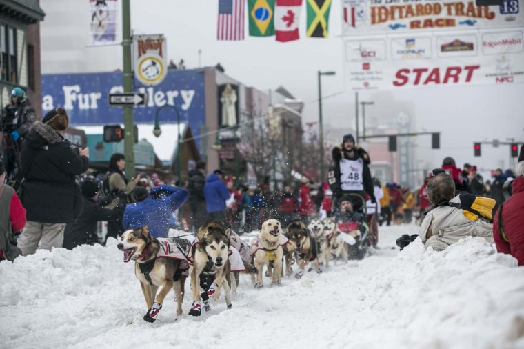 Allen Moore's team charges out of the starting gate on 4th Avenue during the ceremonial start to the Iditarod dog sled race in downtown Anchorage, Alaska March 2, 2013. (Nathaniel Wilder/Reuters)