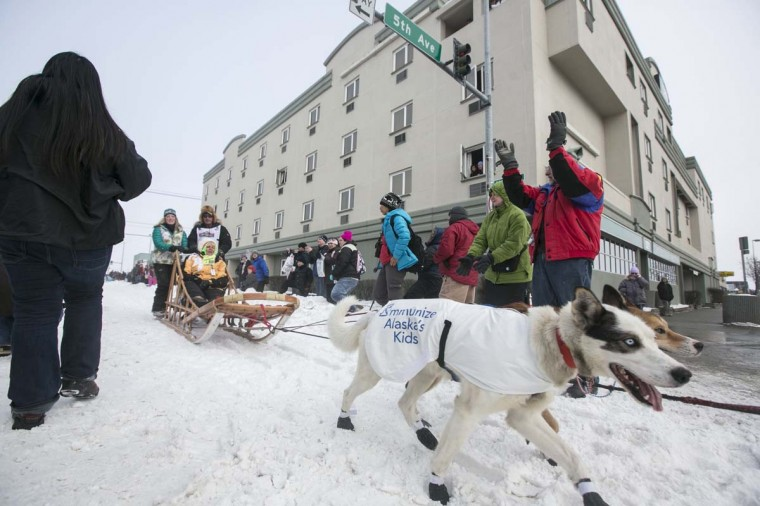 Sonny Lindner's team trots through downtown during the ceremonial start to the Iditarod dog sled race in Anchorage, Alaska March 2, 2013. (Nathaniel Wilder/Reuters)