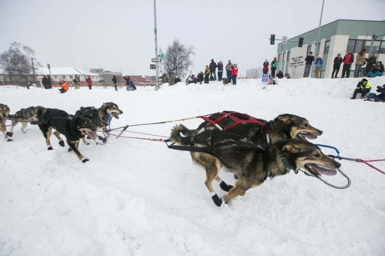 Matt Giblin's team charges around the corner during the ceremonial start to the Iditarod dog sled race in downtown Anchorage, Alaska March 2, 2013. (Nathaniel Wilder/Reuters)