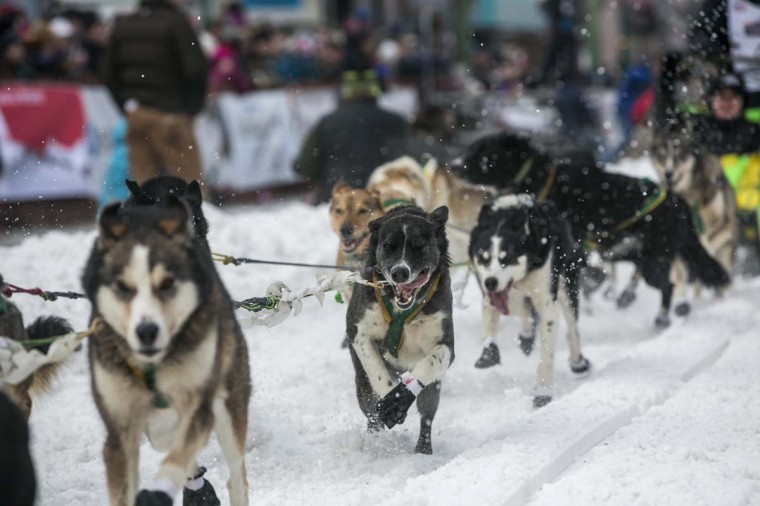 The dogs of Brazilian musher Luan Ramos Marques charge out of the start gate on 4th Avenue during the ceremonial start to the Iditarod dog sled race in downtown Anchorage, Alaska March 2, 2013. (Nathaniel Wilder/Reuters)