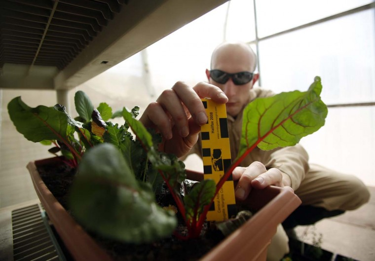 Hans van 't Woud, a mapping researcher and the health and safety officer of Crew 125 EuroMoonMars B mission, checks on plants grown at the Mars Desert Research Station (MDRS) outside Hanksville in the Utah desert March 2, 2013. (Jim Urquhart/Reuters)