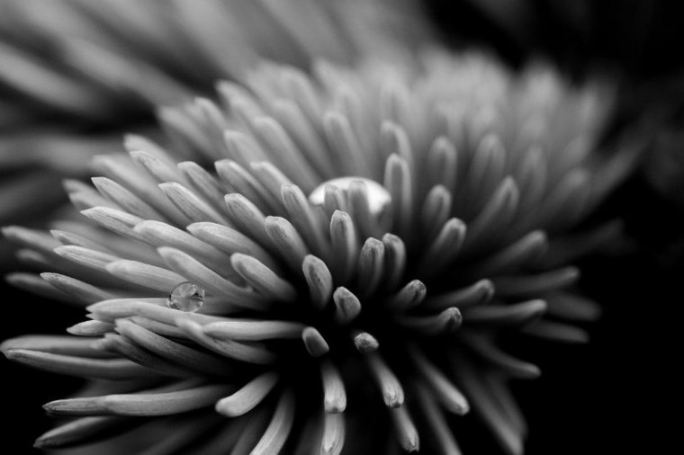 """Dew Drop"" photo by Jim Voeglein"
