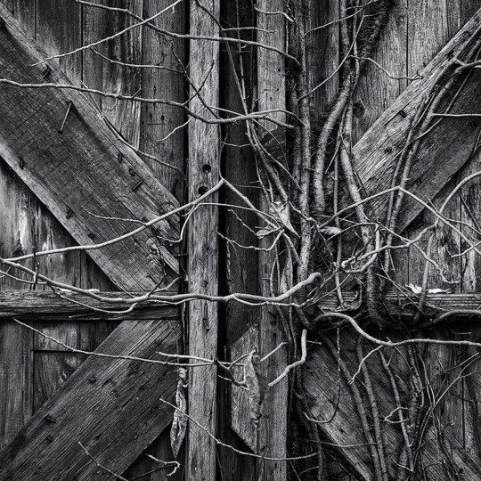 """Vine Covered Door"" photo by Steve Oney"