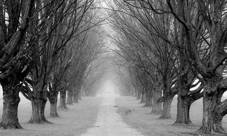 """Foggy Lane"" photo by Mike Navarre"