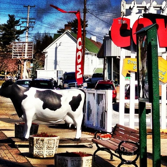 #picturethis13 #baltimore #reisterstown #thecow it's #spring (Photo by woods714)