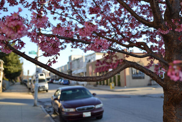 Welcoming spring on Elm Avenue in Hampden. (Steve Earley/Baltimore Sun Staff)