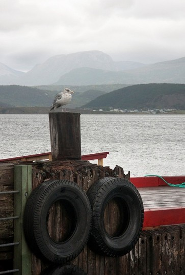 """Harbor Watch at Woody Point"" photo by Kay Muldoon-Ibrahim"