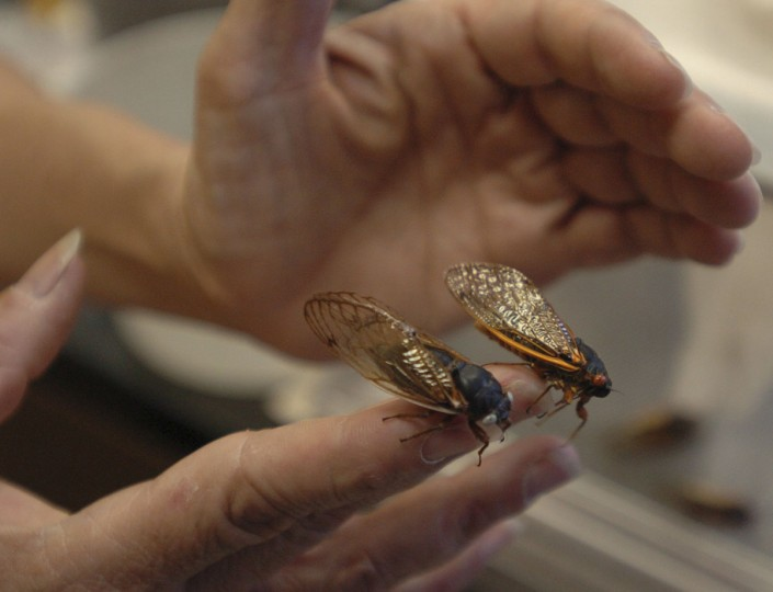 Maryland Department of Agriculture entomologist Gaye Williams displays two different species at her agency's building in Annapolis in 2004. (David Hobby, The Baltimore Sun)