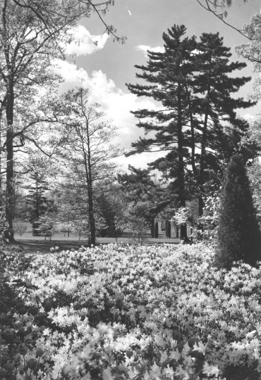 A. Aubrey Bodine photographs Sherwood Gardens in 1938. (A. Aubrey Bodine, The Baltimore Sun)