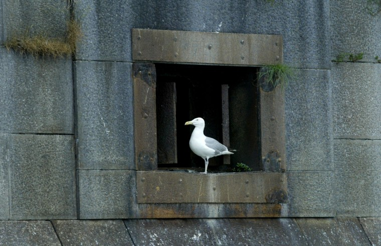 A seagull sits in the window on the east wall of Fort Carroll Sunday evening. Fort Carroll, an abandoned fortress island just south of the Francis Scott Key Bridge. in 2004. (Chris Detrick, The Baltimore Sun)