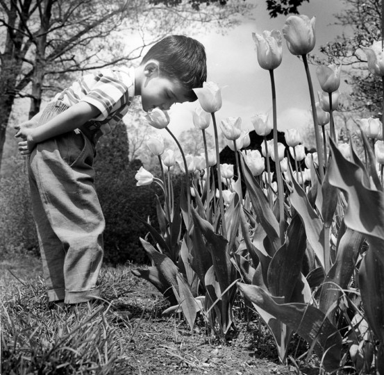 Three-year-old Ernest Sinaly, a visitor from New York, sniffs the flowers of Sherwood Gardens in 1964. (Baltimore Sun File Photo)
