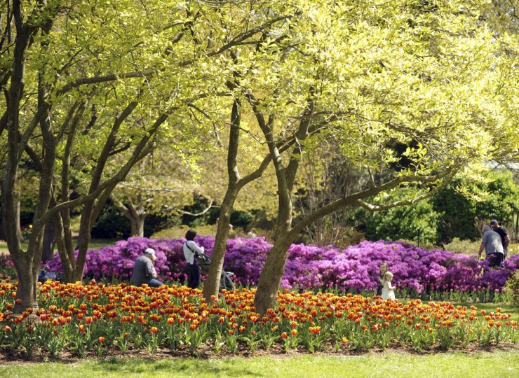 Visitors stroll through Sherwood Gardens in 2012 amidst thousands of tulips and other flowers in bloom. (Brian Krista, The Baltimore Sun Media Group)