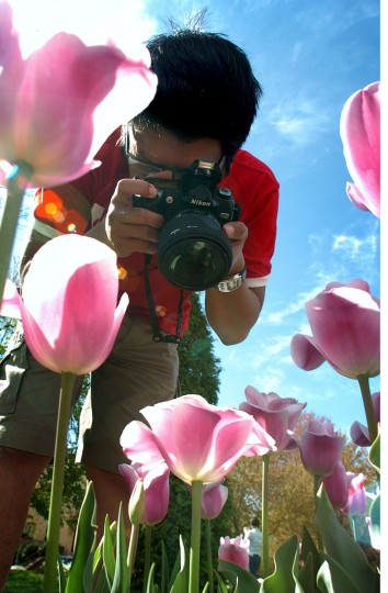 People enjoy the tulips that are in bloom at Sherwood Garden on Easter Sunday. Rizki Zamzami, of Baltimore, concentrates on taking a close-up picture of one of the tens of thousands of tulips in bloom at Sherwood Garden. (Kenneth K. Lam, The Baltimore Sun)