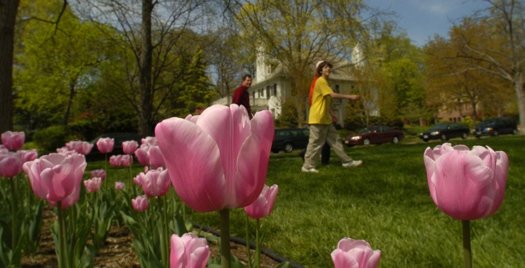 Visitors walk past the tulip beds at Sherwood Gardens on Monday afternoon as most of the Tulips were in full bloom with the recent warm weather. (John Makely, The Baltimore Sun)
