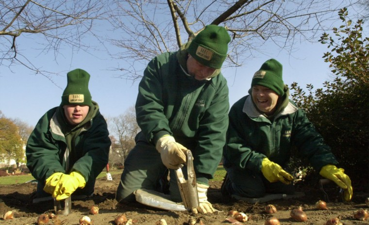 Brian Green, Wilmer Gruber and Terry Alcarez of the Baltimore Association of Retarded Citizens plant some of the 76,000 bulbs in the flower beds of Sherwood gardens. (John Makely, The Baltimore Sun)