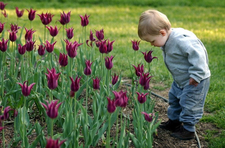 Charlie Hall, 18 months, of Baltimore, takes time to smell the flowers as he and his parents enjoy walk at Sherwood Gardens in Guilford in 2003. (Kenneth K. Lam, The Baltimore Sun)