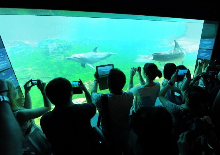 Visitors get a closer look of the dolphins at the marine life park South East Asia world's largest aquarium at Resort World Sentosa in Singapore. Resorts World Sentosa's S.E.A. Aquarium is now the official record holder of two Guinness World Records , the largest aquarium and largest acrylic panel. (Roslan Rahman/Getty Images)
