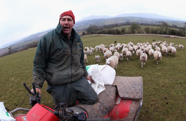 Farmer Dai Brute shouts to his sheep dogs from his quad bike as he feeds sheep in one of his fields at Gwndwnwal Farm on April 1, 2013 in Brecon, Wales. Dai Brute runs Gwndwnwal Farm in Llan-Talyllyn. The recent cold snap has meant that farmers have had to continue feeding their sheep long into the period when they would normally be able to survive on grass the more mild weather. (Chris Jackson/Getty Images)