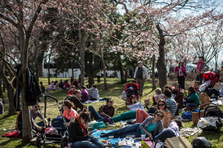 April 7, 2013: People relax around the Tidal Basin where cherry trees are just beginning to bloom in Washington, DC. (Brendan Hoffman/Getty Images)