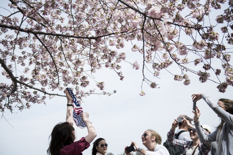 April 7, 2013: Tourists photograph cherry blossoms along the Tidal Basin in Washington. (Brendan Smialowski/AFP/Getty Images)