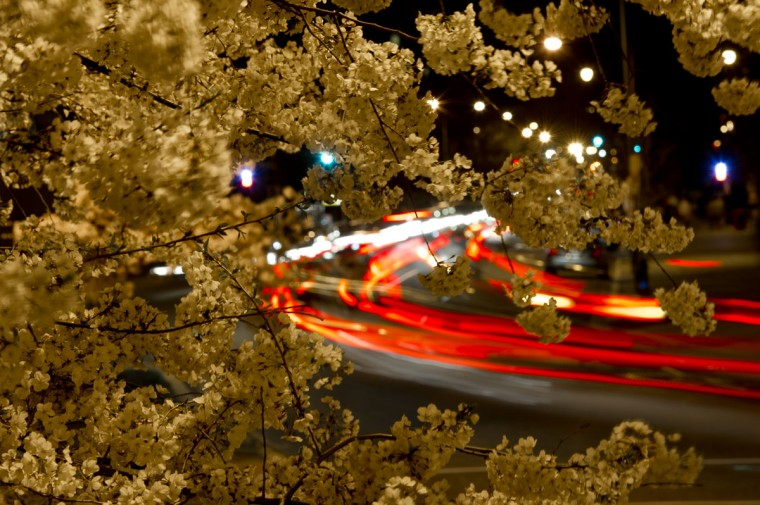 April 08, 2013: Cars pass next to cherry trees in bloom at Scott Circle in downtown Washington. (Mladen Antonov/AFP/Getty Images)