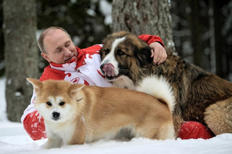 This photo taken on March 24, 2013 shows Russin President Vladimir Putin as he plays with his dogs 'Buffy' (up) and 'Yume' at his residence Novo-Ogariovo, outside Moscow. Bulgarian shepherd dog 'Buffy' was presented to Putin by his Bulgarian counterpart Boyko Borisov while Japanese Prime Minister Yoshihiko Noda offered Putin the puppy 'Yume' as a gift during the G20 in Mexico in June. (Alexsey Druginyn-Pool via AFP/Getty Images)