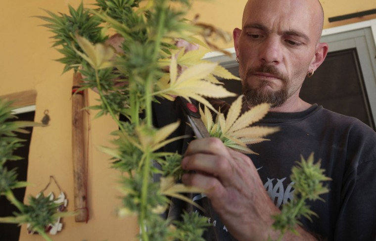 Andres Ibarra, the 40-year-old gardener and president of the Sibaratas Med Can club, takes cuttings from a cannabis plant at the plantation of the association in Mogan on the southwest coast of the island of Gran Canaria. Spanish law prohibits the possession of soft drugs like cannabis in public and its growth to be sold for profit is illegal. But the law does tolerate growing cannabis for personal use and its consumption in private. Dozens of private marijuana smoking clubs operate across Spain that take advantage of this legal loophole that serve cannabis users who do not want to get their drugs from the streets. (Desiree Martin/AFP/Getty Images)