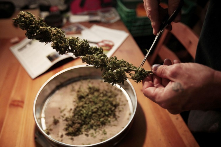 A member of the Sibaratas Med Can club dissects dried marijuana flowers before storing them in a jar at the plantation of the association in Mogan on the southwest coast of the island of Gran Canaria. Spanish law prohibits the possession of soft drugs like cannabis in public and its growth to be sold for profit is illegal. But the law does tolerate growing cannabis for personal use and its consumption in private. Dozens of private marijuana smoking clubs operate across Spain that take advantage of this legal loophole that serve cannabis users who do not want to get their drugs from the streets. (Desiree Martin/AFP/Getty Images)
