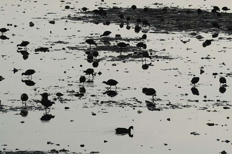 Aquatic birds search for food at the Hussain Sagar lake in Hyderabad during World Earth Day. (Noah Seelam/AFP/Getty Images)