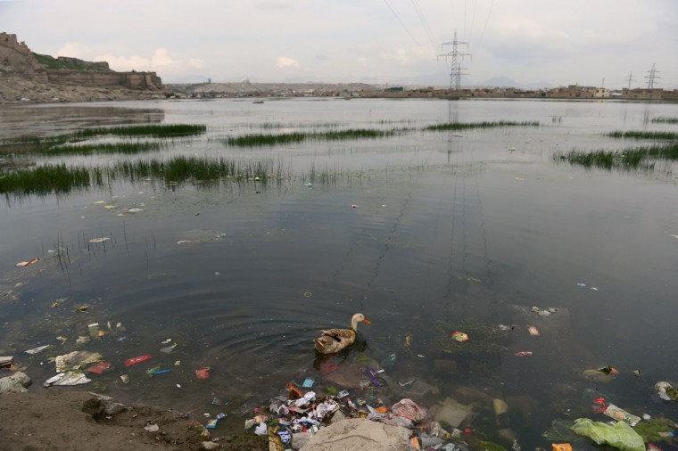A duck swims among trash thrown into a dam in Kabul during World Earth Day. Environmental groups are pushing for stronger forest and wildlife protection and conservation as April 22, 2013 marks World Earth Day. (Massoud Hossaini/AFP/Getty Images)