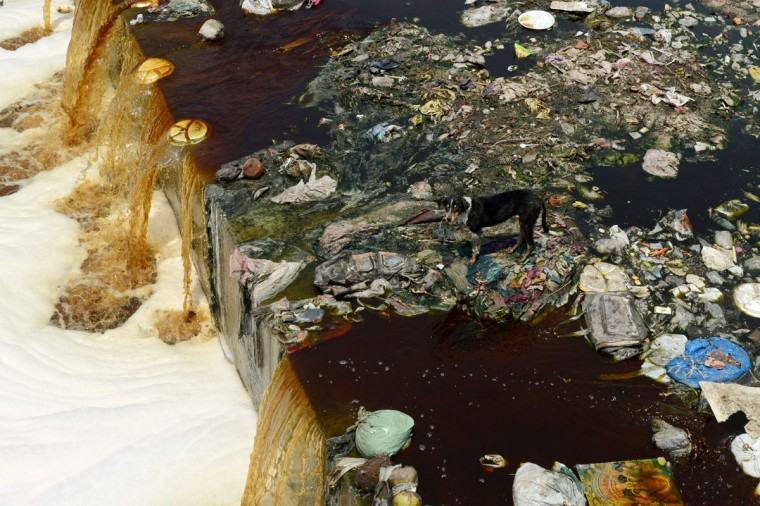 A dog looks on amid trash as polluted waters flow down a canal on the outskirts of Ahmedabad during World Earth Day on April 22, 2013. World Earth Day is observed each April 22, during which events are held worldwide to demonstrate support for environmental protection. (Sam Panthaky/AFP/Getty Images)