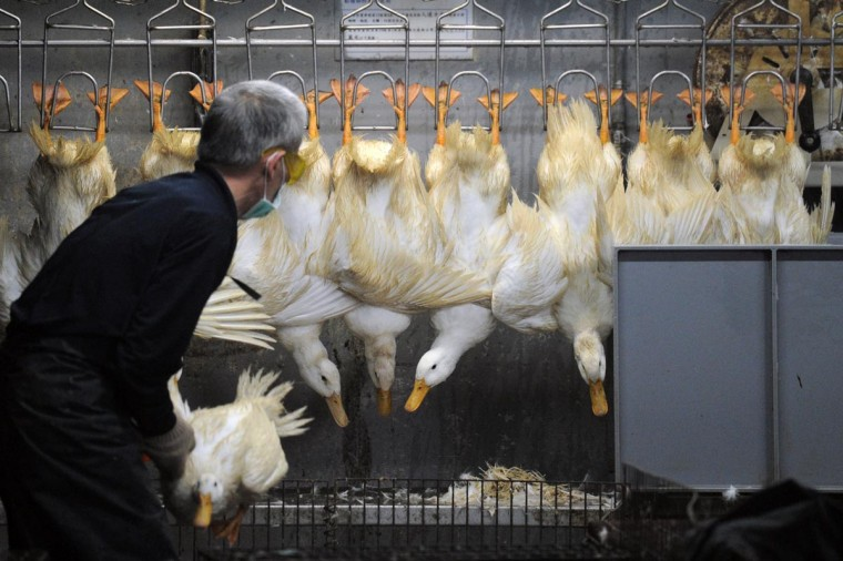 A masked staff member of a poultry market sorts out ducks in Taipei on April 26, 2013. Asian countries on April 25 urged renewed vigilance against a spread of H7N9 bird flu after Taiwan reported a case of the deadly strain, the world's first outside mainland China. (Sam Yeh/AFP/Getty Images)