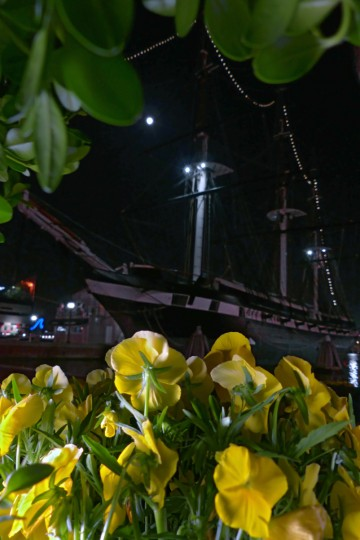 A bed of pansies in front of the U.S.S. Constellation at Harborplace for springtime greenery in the Baltimore area Tuesday, Apr. 23, 2013. (Karl Merton Ferron/Baltimore Sun Staff)