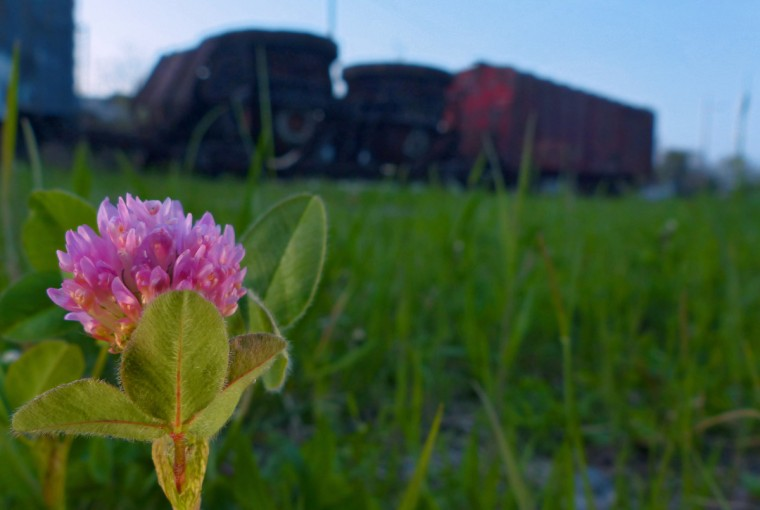Clover with a train at the end of S. Fulton Street as a backdrop for springtime greenery in the Baltimore area Tuesday, Apr. 23, 2013. (Karl Merton Ferron/Baltimore Sun Staff)