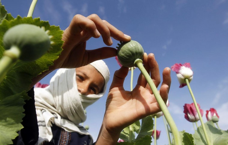A boy works at a poppy field in Jalalabad province April 7, 2013. (Parwiz/Reuters)