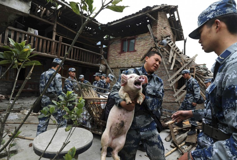 Rescue workers carry a pig out from a damaged house after Saturday's earthquake hit Lushan county, Ya'an, Sichuan province. The earthquake left 193 dead, 25 missing and 12,211 injured as of 6 a.m. Tuesday, according to Xinhua News Agency. (China Daily)