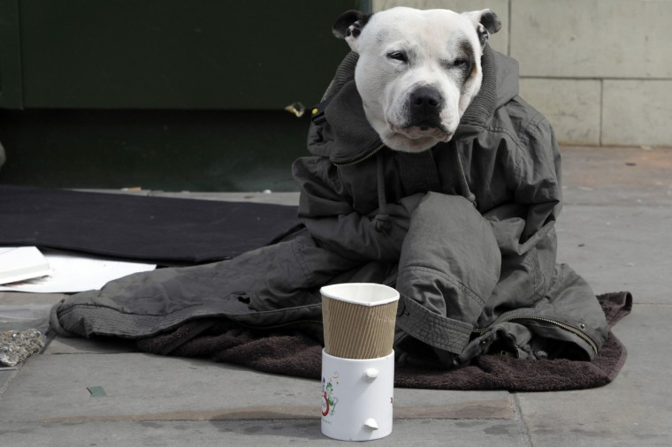 A dog wrapped in a jacket, belonging to a street artist, sits on a pavement in London. An influential academic paper which made the case for austerity, is thought to be flawed. The paper, called 'Growth in a Time of Debt' by Harvard professors, Carmen Reinhart and Ken Rogoff, has data missing, according to Universtiy of Massachusetts student, Thomas Herndon. (Stefan Wermuth/Reuters)
