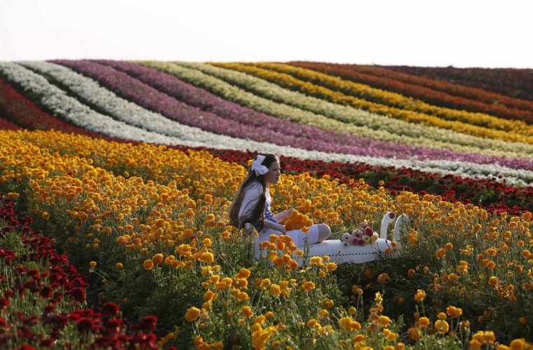 An Israeli girl sits on a stool in a buttercup plantation, near the southern town of Kiryat Gat . (Baz Ratner/Reuters)