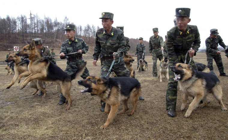 North Korean soldiers with military dogs take part in drills in an unknown location in this picture taken on April 6, 2013 and released by North Korea's official KCNA news agency in Pyongyang on April 7, 2013. (KCNA via Reuters)