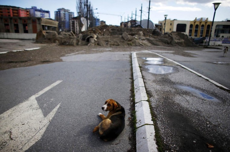 A dog lies near the barricade set up on the main bridge in the ethnically divided town of Mitrovica March 19, 2013. Serbia does not recognize Kosovo's 2008 secession, but is under pressure from the European Union to improve ties and help overcome a split between Kosovo's Albanians and a Serb enclave in the north over which Belgrade retained de facto control. Picture taken March 19, 2013. (Marko Djurica/Reuters)