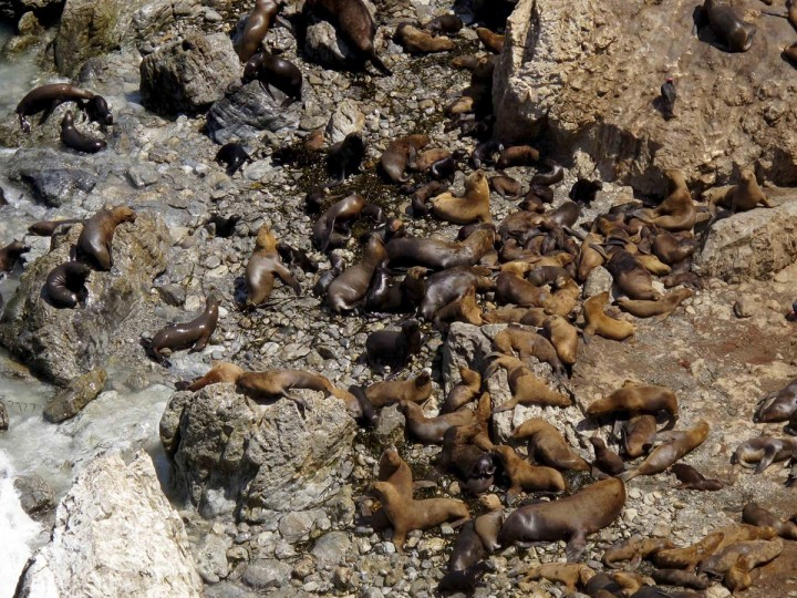 A colony of sea lions rest on the shore of a beach at the bay of San Fernando, a national reserve, in Nazca, Ica, March 30, 2013. The bay, approximately more than 150,000 hectares in size, is a natural habitat to birds like guanayes, pelicans and boobies, along with a dozen marine mammals including sea lions, according to the National Service of Protected Natural Areas (SERNANP). (Mariana Bazo/Reuters)